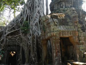 Ta Prohm: El Templo de la Selva en Angkor