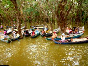 Tonle Sap - inundado bosque de manglar